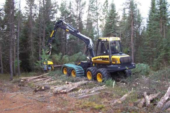 Harvesting Spruce - Last winter, as ti was so mild, caused lots of problems in getting the timber from the forests