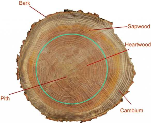 Parts of a tree trunk