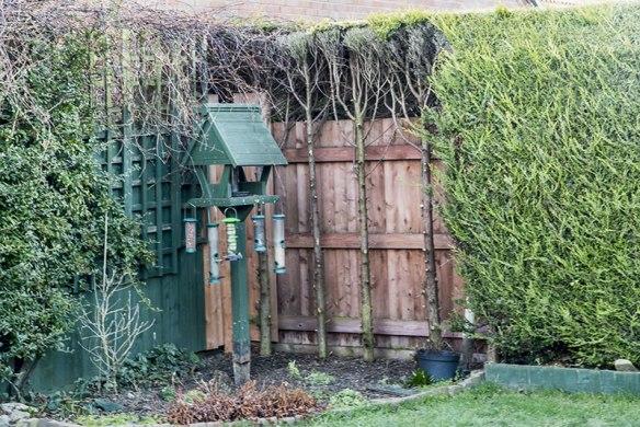 A redundant corner location in Mr L's Garden
