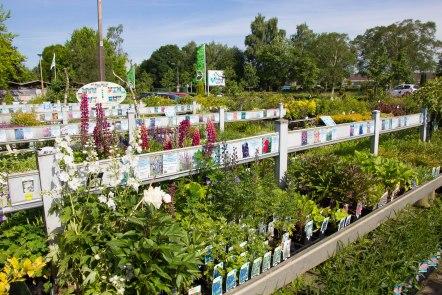 Tuincentrum-bloemsierkunst-Odink-tuincentrum-3301