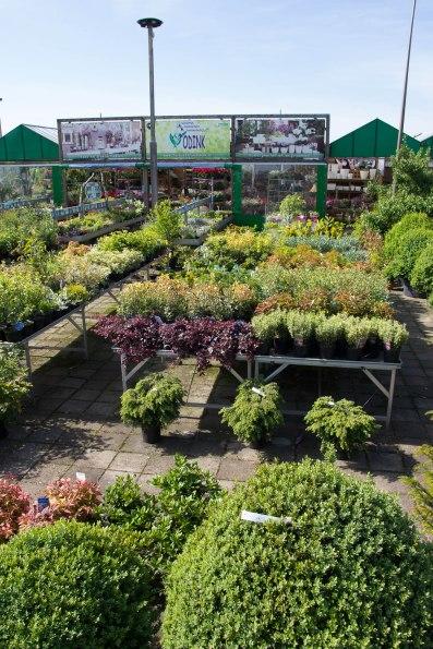 Tuincentrum-bloemsierkunst-Odink-tuincentrum-3322