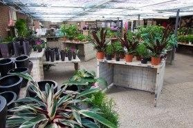 Tuincentrum-bloemsierkunst-Odink-winkel-3362