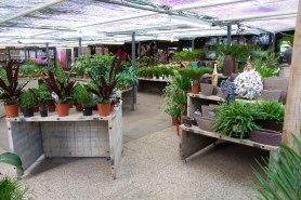 Tuincentrum-bloemsierkunst-Odink-winkel-3363