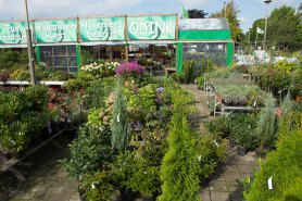 tuincentrum-bloemsierkunst-hoveniersbedrijf-Odink-5774
