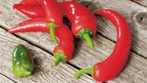 Afbeeldingsresultaat voor paprika zaaien