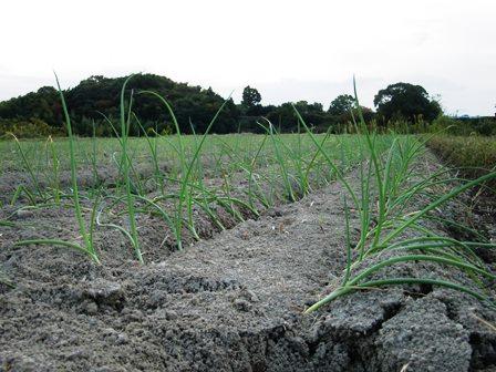農園ブログA151111-03