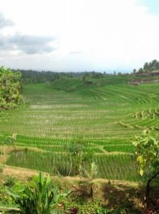 Indonesien_2_Rundreise082