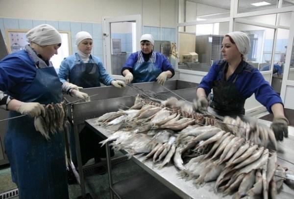 В Тюменской области вырастили более 1500 тонн рыбы
