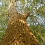 Starodrzewy program ochrony old groth tree sare drzewa nature przyroda protection Inowrocław Kujawy Poland środowiska wycinka natury lasy animal wegan vegun ekologia ecology