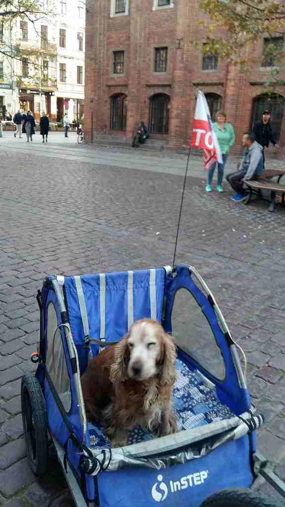 Flower Power Rower Rover Toruń Thorn doggy dogggy dogy cart Polska Ino rowerowy masa krytyczna