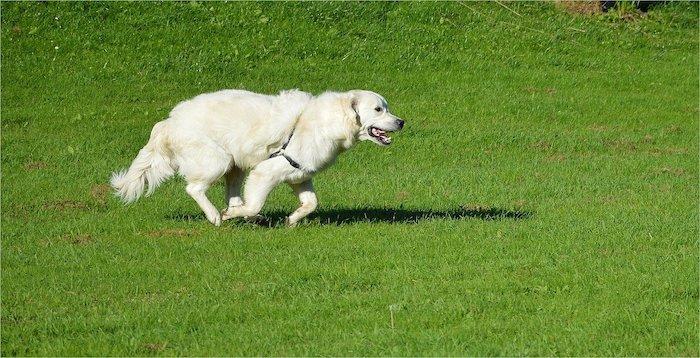 Fairbrook Optimist dog Park, Hickory, North Carolina