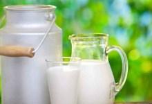 """Photo of النقابة التونسية للفلاحين: """"قرار التوقف عن تجميع الحليب سيزيد في إضرار المربين"""""""
