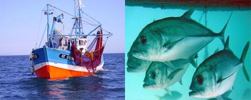 Des résolutions pour le secteur de la pêche à Zarzis