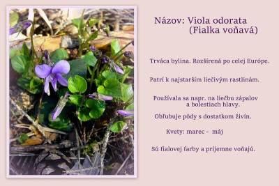 Turčianska záhradka - Flóra Turca