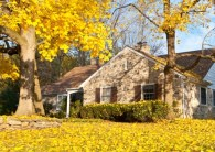 How to Deal with Tree Root Problems