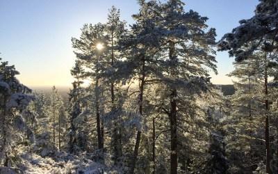 Søndagstur til vinterland