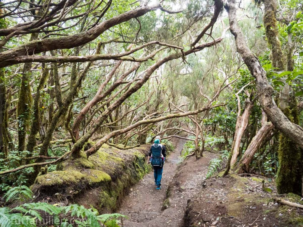 naturen og trær i anaga