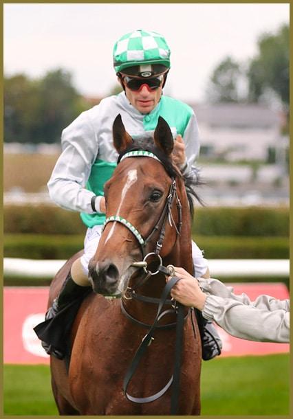 Rennpferd mit Potenzial: Rip Van Lips