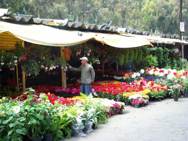 Feria de las Flores, Ciudad de México