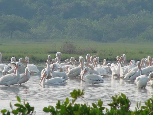 Laguna de Tamiahua, Veracruz