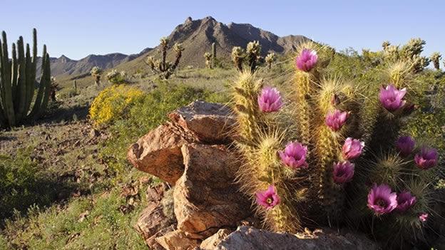 Reserva de la Biosfera de el Pinacate y Gran Desierto de Altar, Sonora