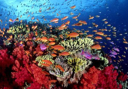 Arrecifes en México