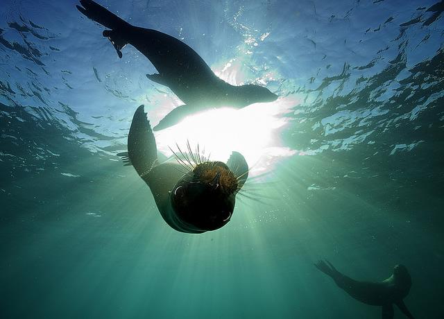 Sumergiéndonos en el Mar de Cortés