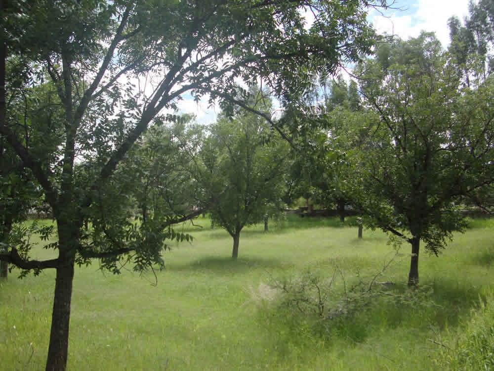 Grandes Huertas de Nogales en Chihuahua