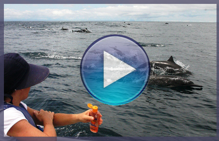 Video_Delfines_en_Bahia_Solano
