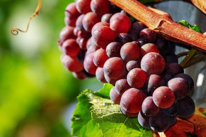 vinho argolida