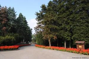 MONTE AVALA: uno dei tanti sentieri alberati