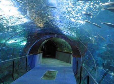 aquarium-san-sebastian