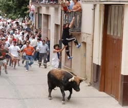 Toro con soga en Lodosa 1