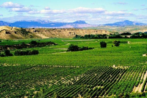 Rutas en bus por La Rioja, castillos y bodegas 1