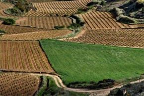 Rutas en bus por La Rioja, castillos y bodegas