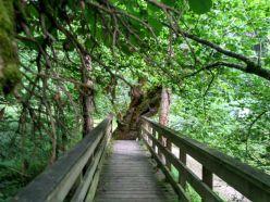 Puente sobre el río Obaya