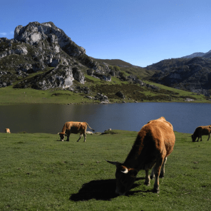 Lakes of Covadonga. Picos de Europa mountains.