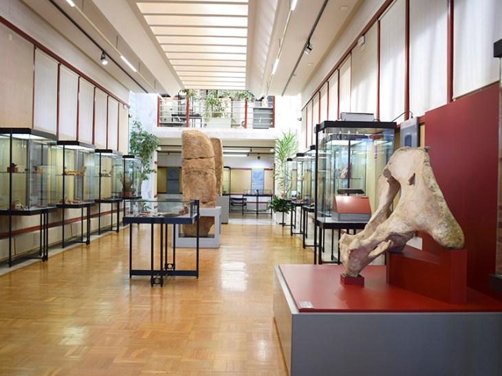 Museo Numantino – Turismo Soria