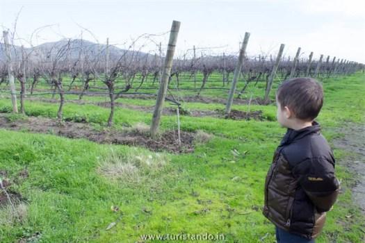 Vinicola Organica Emiliana Casablanca Chile 004 525x350 Vinícolas no Chile: Tour degustação na Emiliana