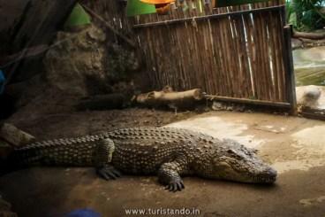 %name O Zoológico de Buin (Buin Zoo), perto de Santiago do Chile