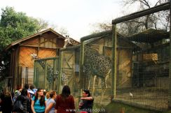 %name O Zoológico de Santiago no Parque Metropolitano
