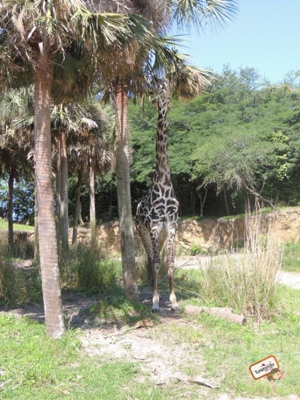Durante o safari você vê os animais quase de perto