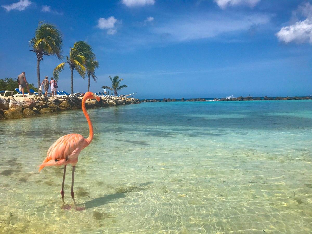 Flamingo Beach - um dos passeios mais lindos em Aruba
