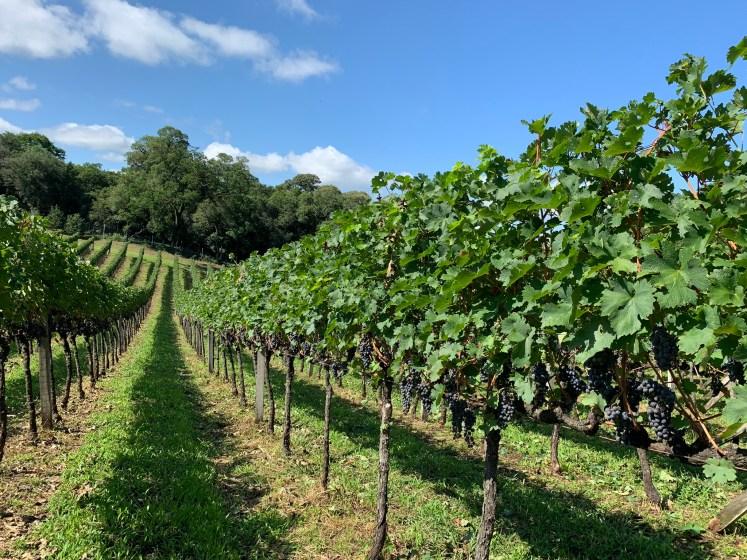 vinícolas vale dos vinhedos
