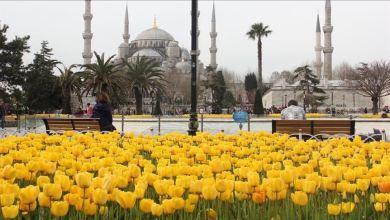 "Photo of إسطنبول تستنشق الربيع بأزهار ""التوليب"""
