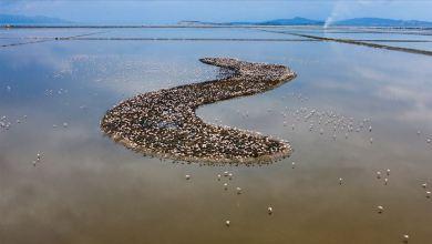 Photo of في جزيرة بإزمير التركية.. 18 ألف فرخ فلامينغو يبصر النور