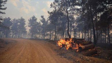 Photo of حريق يلتهم 300 هكتار من غابات شمال غربي تركيا