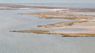 "Photo of بحيرة ""هـوما"" الشاطئية في تركيا تتحول إلى محمية للطيور المائية"