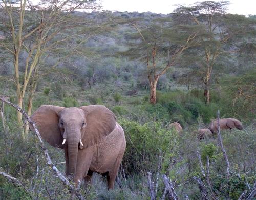 Elephants watching us!