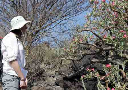 Milena contemplates the age of this large desert rose tree.